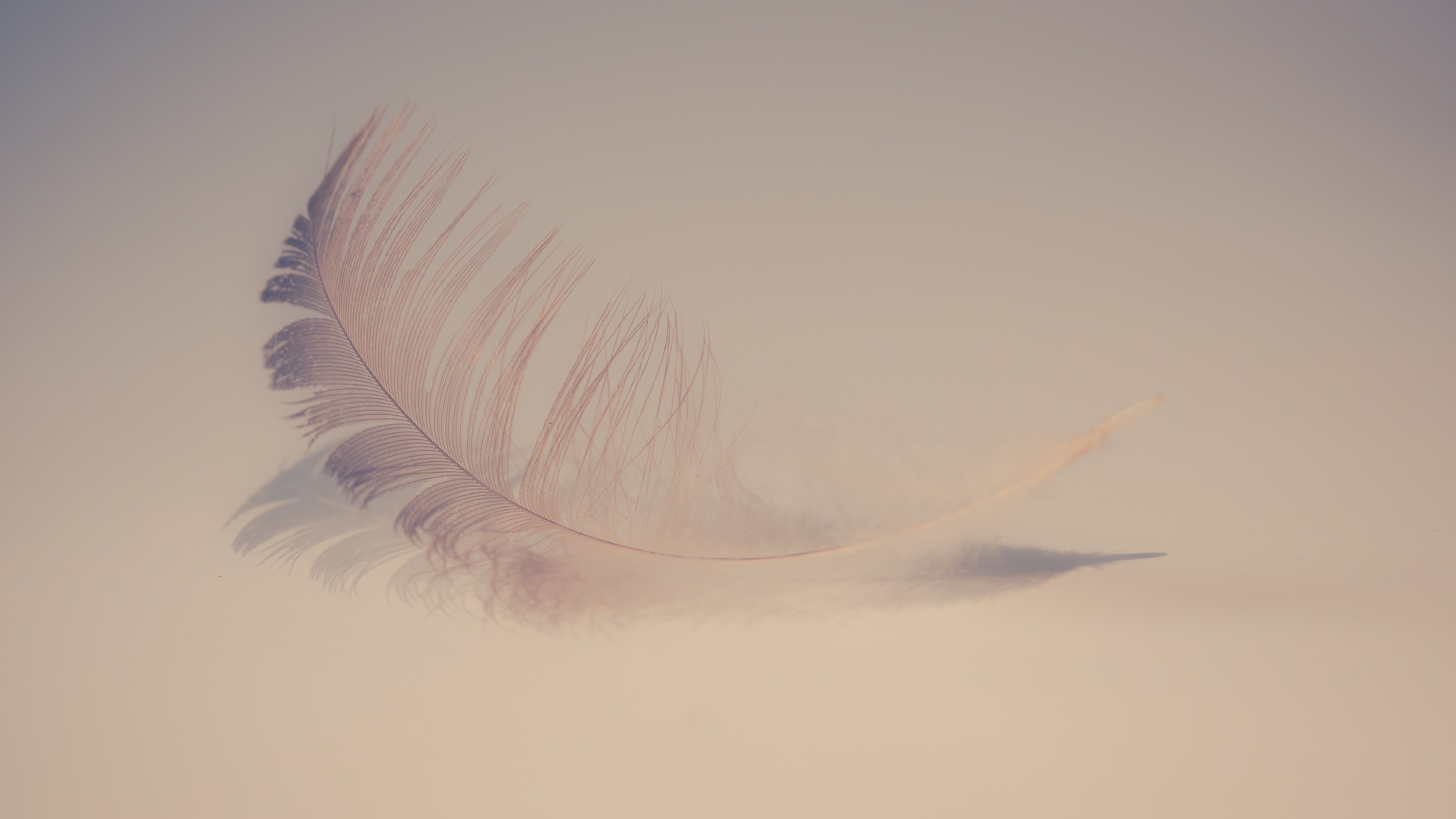 Wallpaper 4k Feather Soft 4k 4k Wallpapers 5k Wallpapers