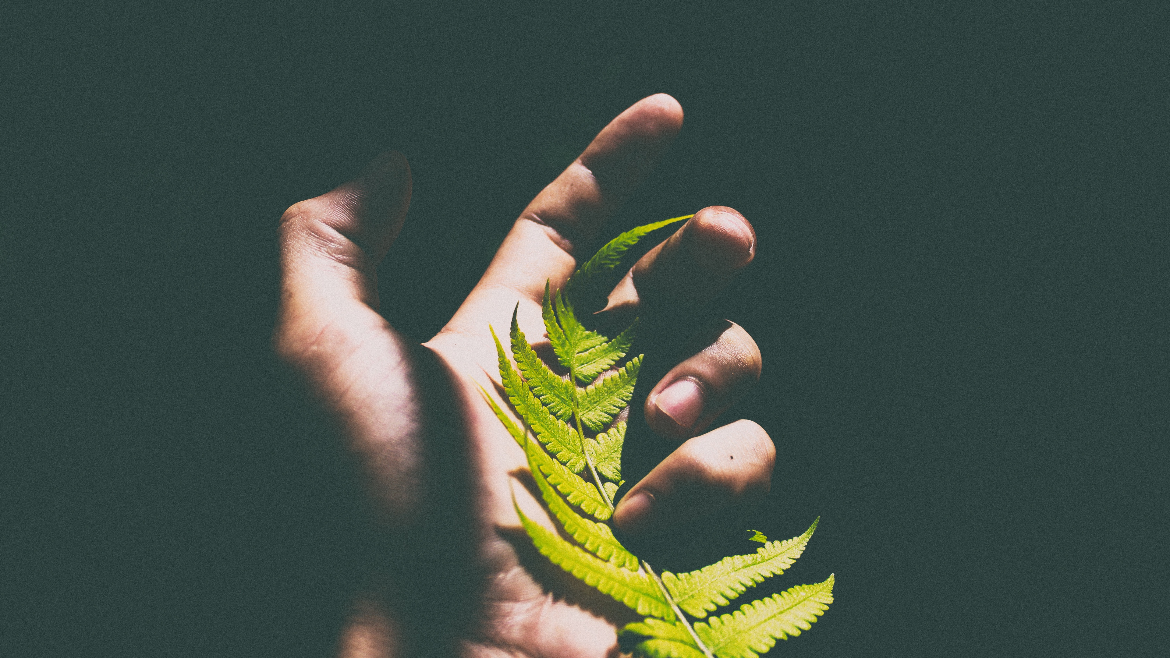 Wallpaper 4k Fern Leaf Hand Shadow 4k Fern Hand Leaf