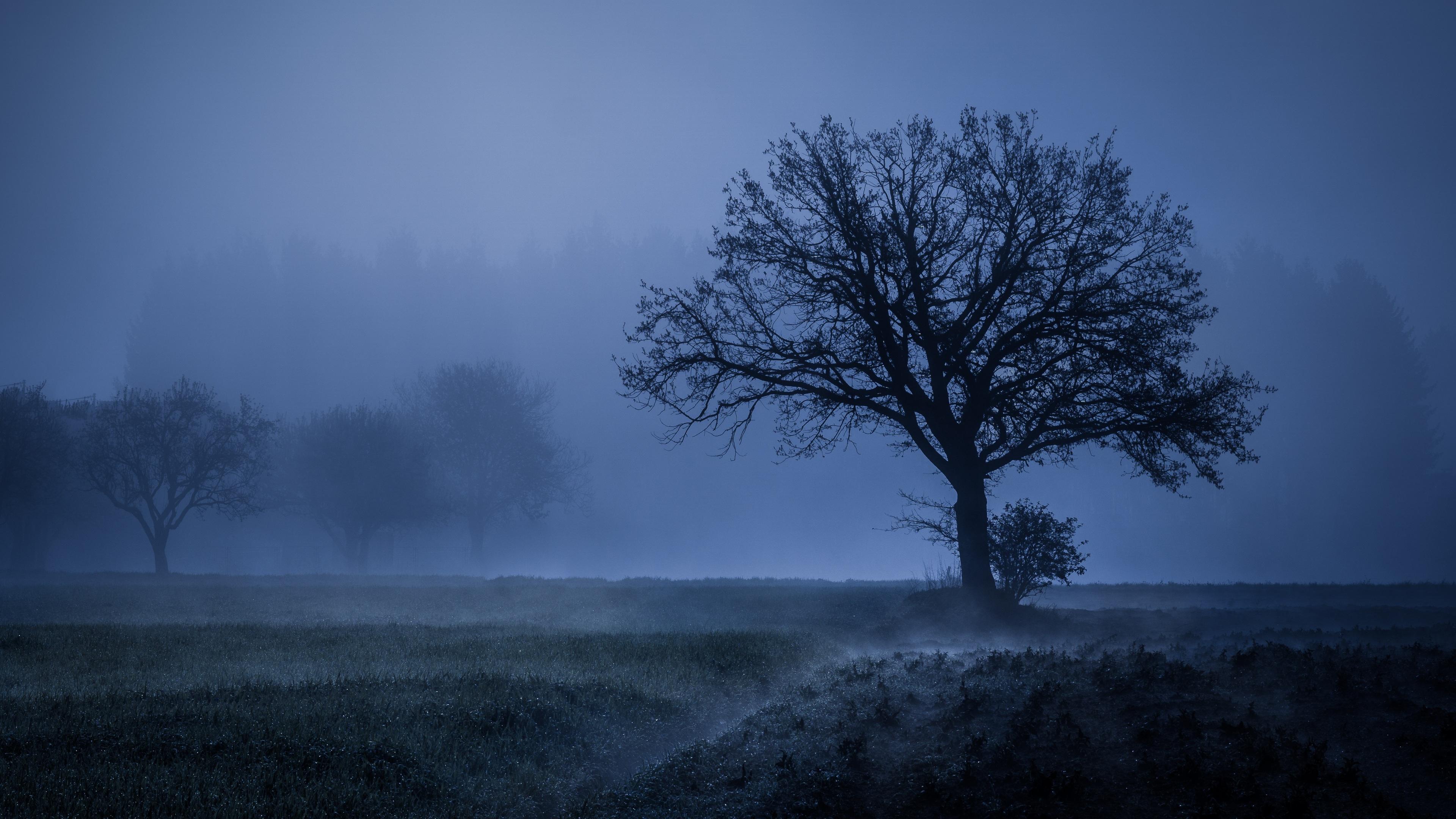 field fog trees blue weather cold 4k 1540135103 - Field Fog Trees Blue Weather Cold 4k - weather wallpapers, trees wallpapers, nature wallpapers, hd-wallpapers, fog wallpapers, field wallpapers, cold wallpapers, 5k wallpapers, 4k-wallpapers