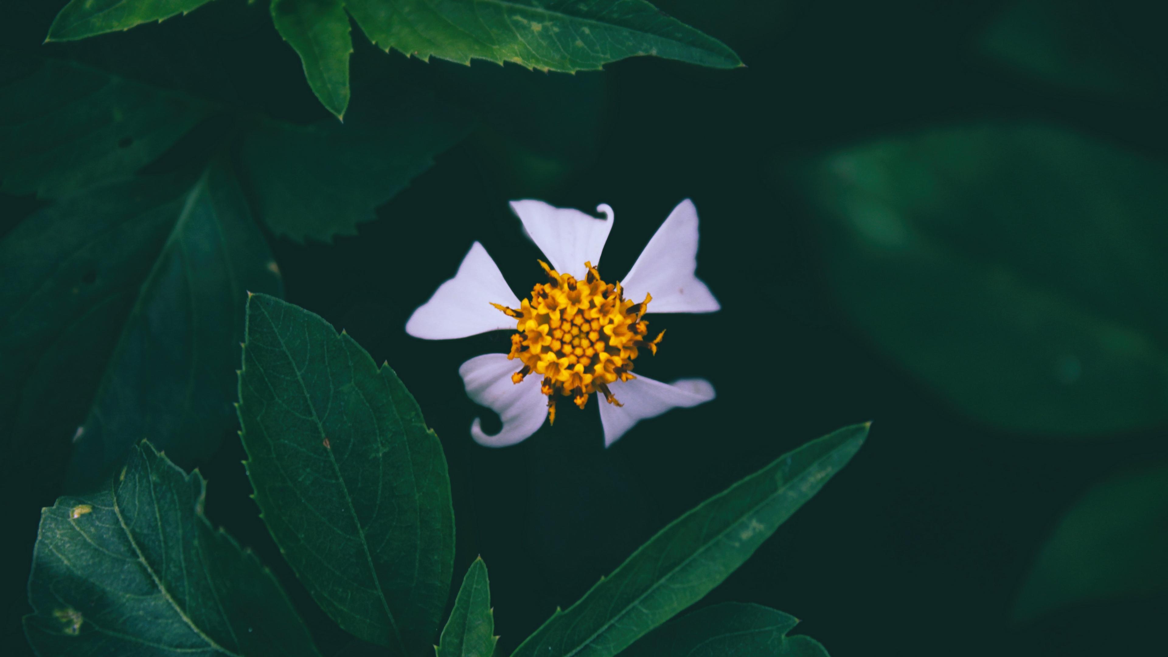 flower closeup bud petals 4k 1540064427 - flower, closeup, bud, petals 4k - flower, Closeup, bud