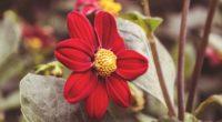 flower red petals close up 4k 1540064775 200x110 - flower, red, petals, close-up 4k - red, Petals, flower
