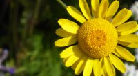 flower yellow petals 4k 1540064139 200x110 - flower, yellow, petals 4k - yellow, Petals, flower