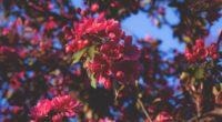 flowering flowers tree branches pink 4k 1540064498 200x110 - flowering, flowers, tree, branches, pink 4k - tree, Flowers, Flowering