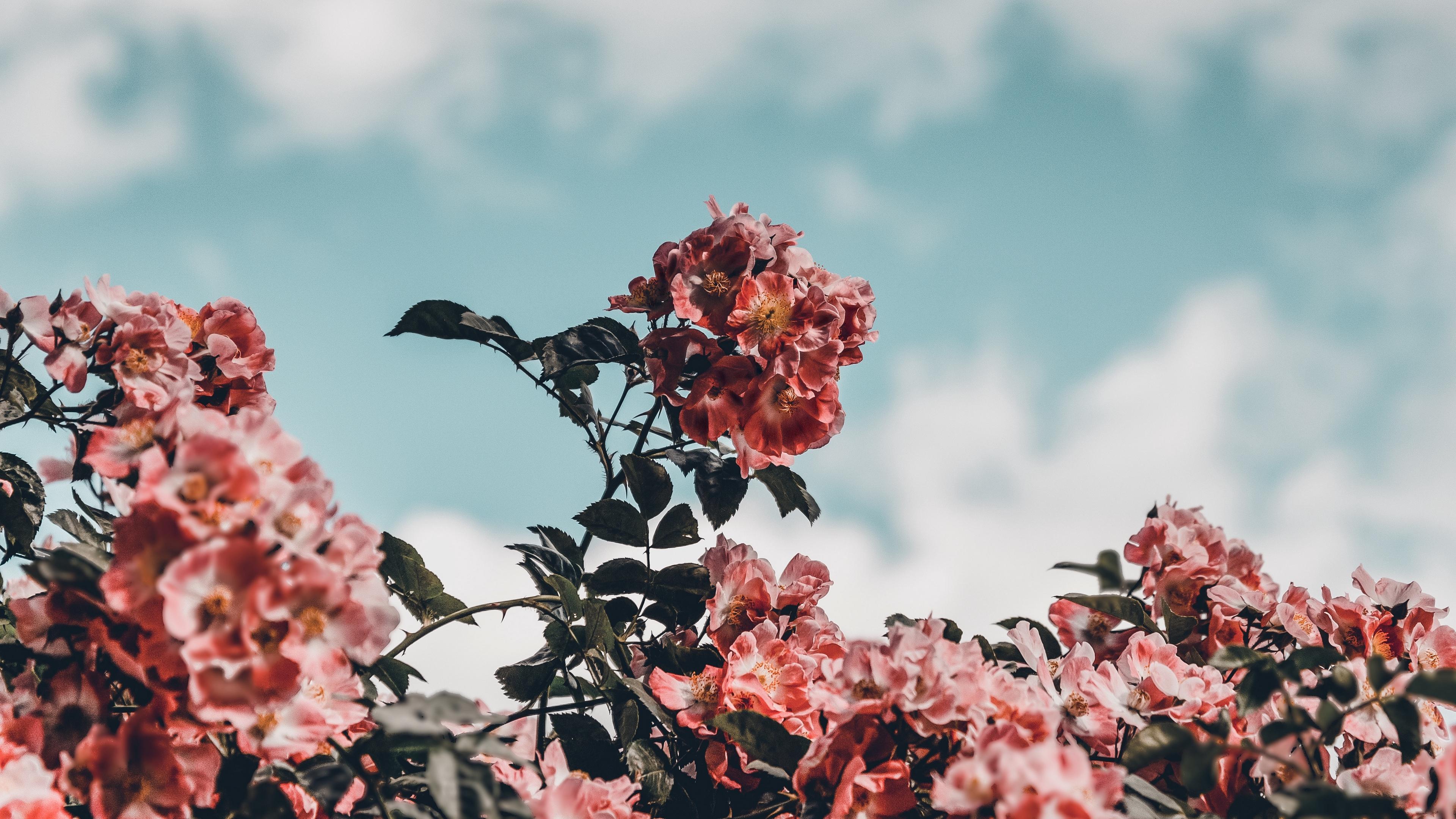 flowers bloom bush sky 4k 1540064896 - flowers, bloom, bush, sky 4k - Flowers, Bush, Bloom