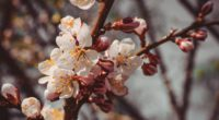 flowers bloom spring branch close up 4k 1540064508 200x110 - flowers, bloom, spring, branch, close-up 4k - Spring, Flowers, Bloom