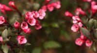 flowers blur bush 4k 1540064434 200x110 - flowers, blur, bush 4k - Flowers, Bush, Blur