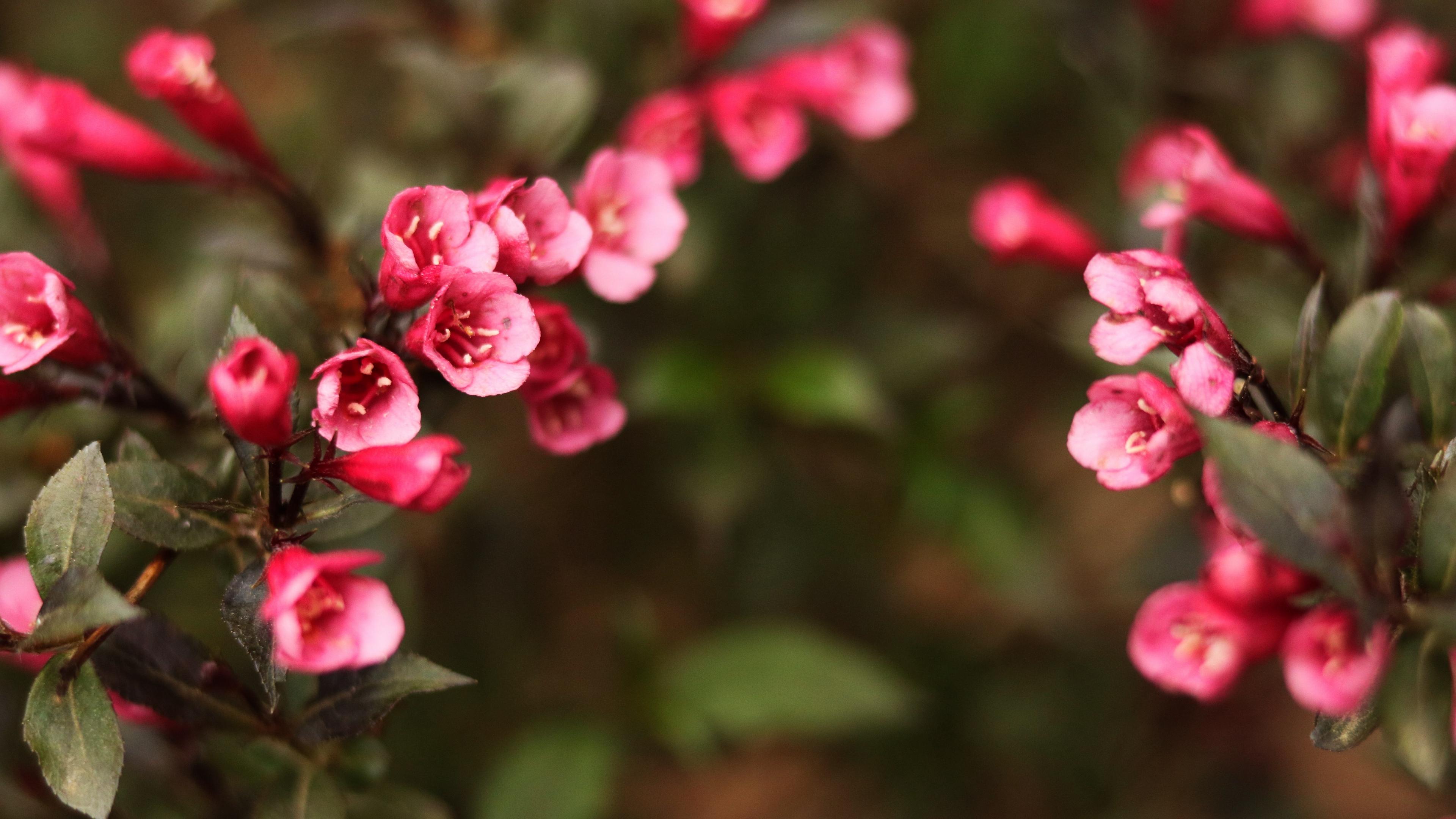 flowers blur bush 4k 1540064434 - flowers, blur, bush 4k - Flowers, Bush, Blur