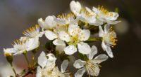 flowers branch flowering spring 4k 1540064888 200x110 - flowers, branch, flowering, spring 4k - Flowers, Flowering, branch