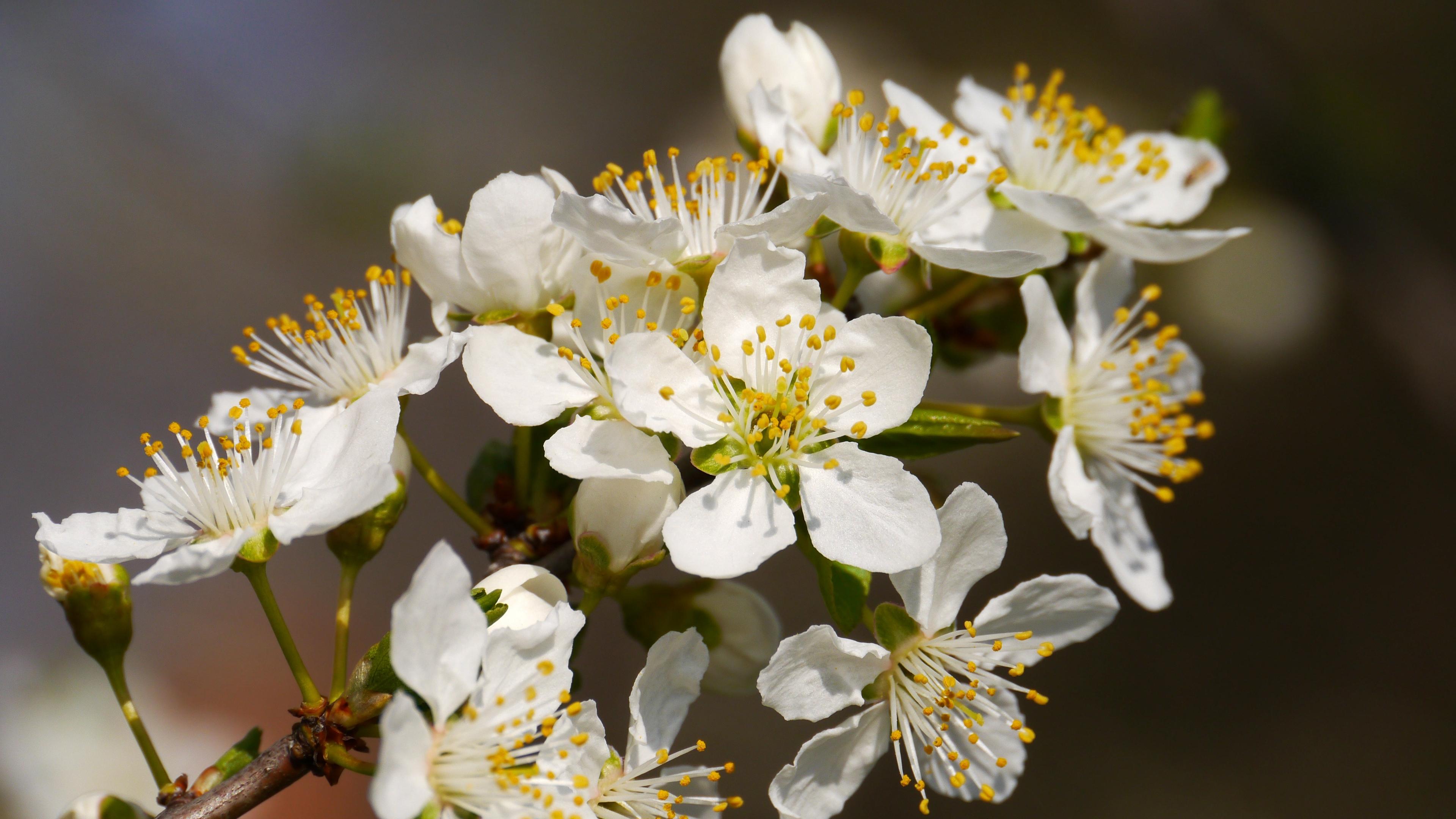 flowers branch flowering spring 4k 1540064888 - flowers, branch, flowering, spring 4k - Flowers, Flowering, branch
