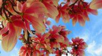 flowers branch sky 4k 1540065051 200x110 - flowers, branch, sky 4k - Sky, Flowers, branch