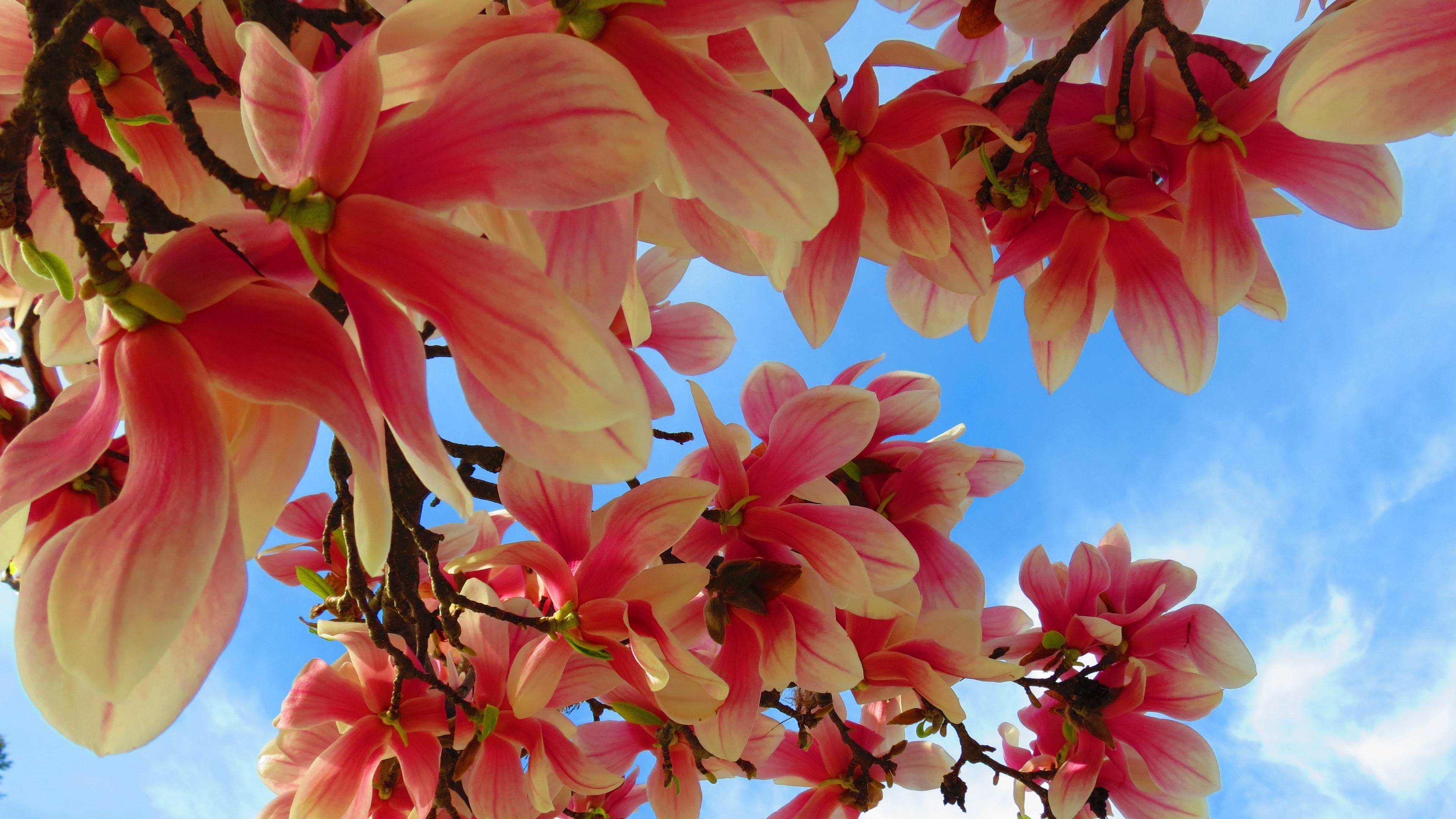 flowers branch sky 4k 1540065051 - flowers, branch, sky 4k - Sky, Flowers, branch