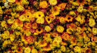 flowers composition floral carpet 4k 1540064910 200x110 - flowers, composition, floral carpet 4k - Flowers, floral carpet, composition