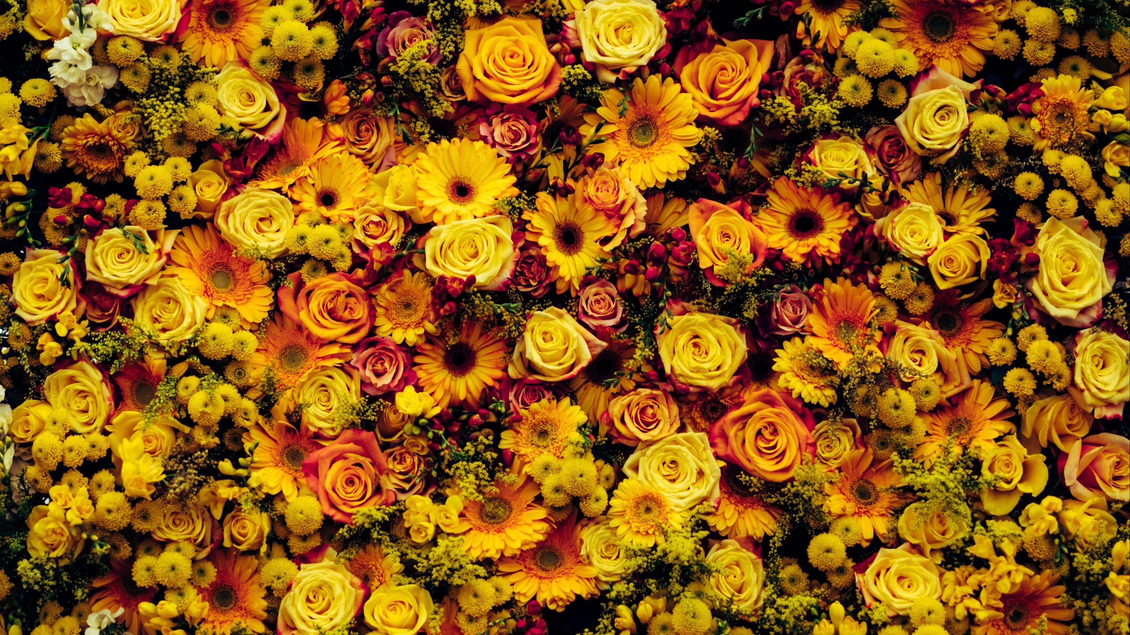 flowers composition floral carpet 4k 1540064910 - flowers, composition, floral carpet 4k - Flowers, floral carpet, composition
