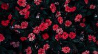 flowers drops red bloom flowerbed 4k 1540064912 200x110 - flowers, drops, red, bloom, flowerbed 4k - red, Flowers, Drops