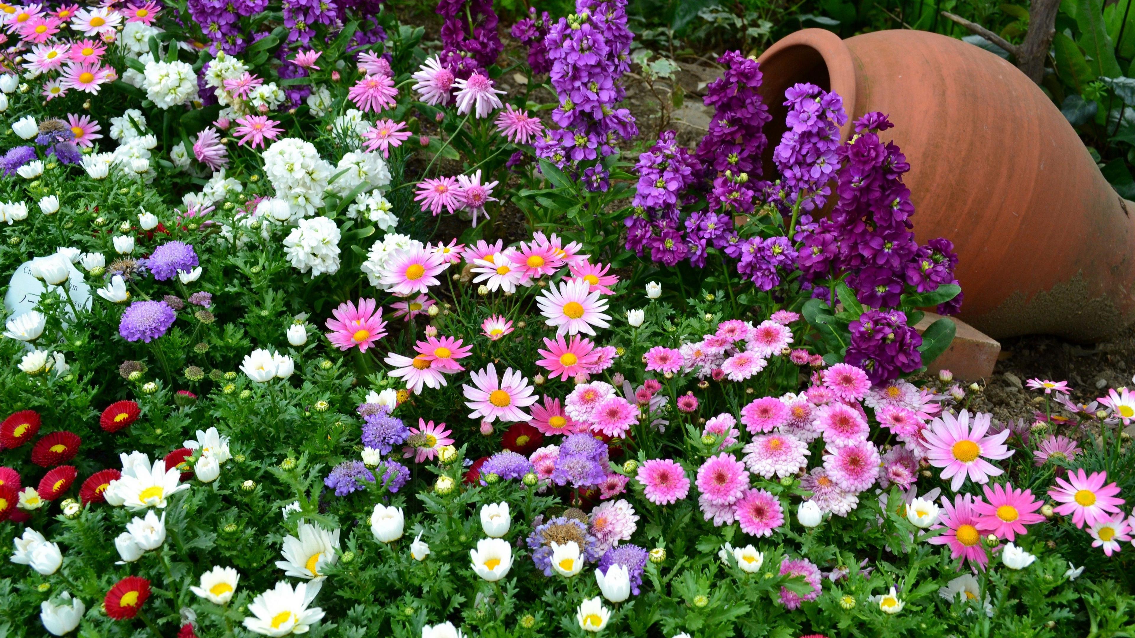 flowers flowerbed different much greens vase garden 4k 1540064738 - flowers, flowerbed, different, much, greens, vase, garden 4k - Flowers, flowerbed, Different