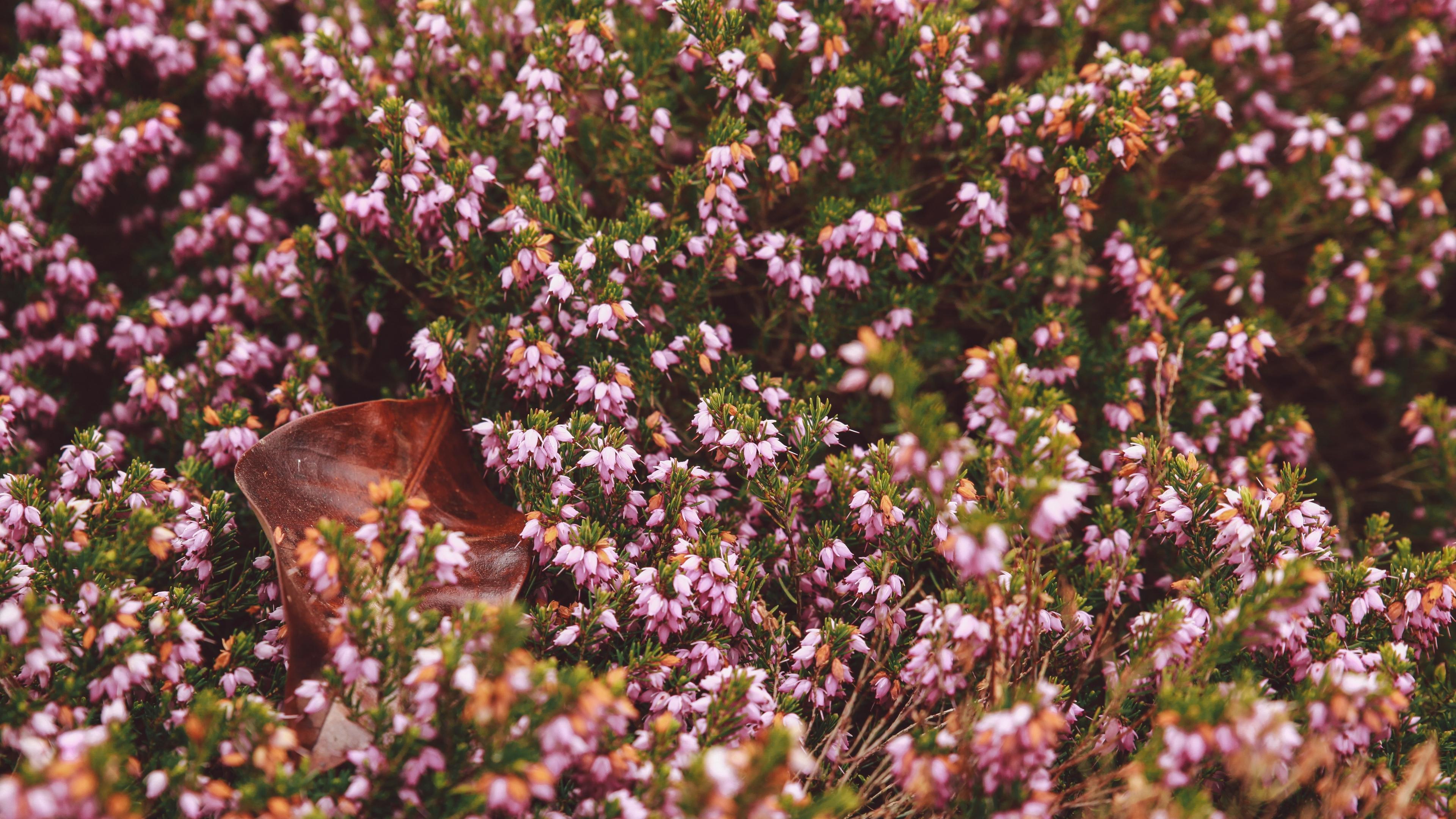 flowers garden flowerbed autumn 4k 1540064151 - flowers, garden, flowerbed, autumn 4k - Garden, Flowers, flowerbed