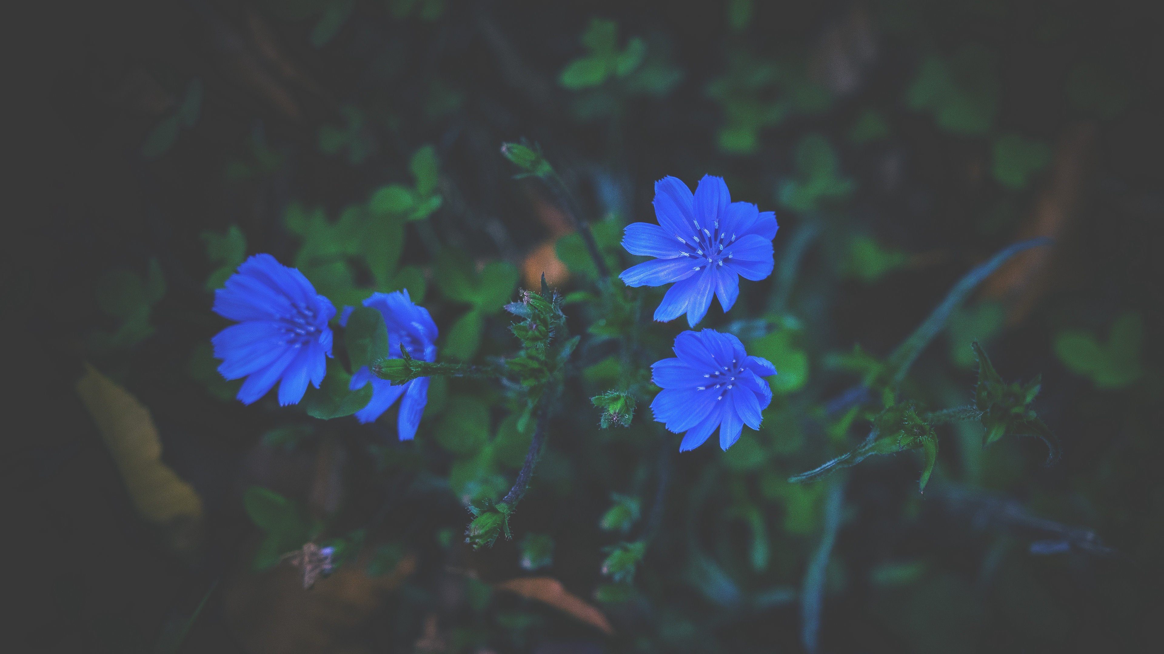 flowers grass blue 4k 1540574458 - flowers, grass, blue 4k - Grass, Flowers, blue