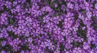 flowers lilac inflorescence flowering 4k 1540064557 200x110 - flowers, lilac, inflorescence, flowering 4k - Lilac, inflorescence, Flowers