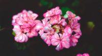flowers petals pink 4k 1540064373 200x110 - flowers, petals, pink 4k - Pink, Petals, Flowers