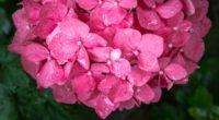 flowers petals pink drops 4k 1540064725 200x110 - flowers, petals, pink, drops 4k - Pink, Petals, Flowers