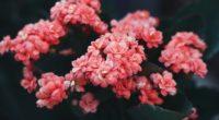 flowers pink bloom bush wild flower 4k 1540065147 200x110 - flowers, pink, bloom, bush, wild flower 4k - Pink, Flowers, Bloom