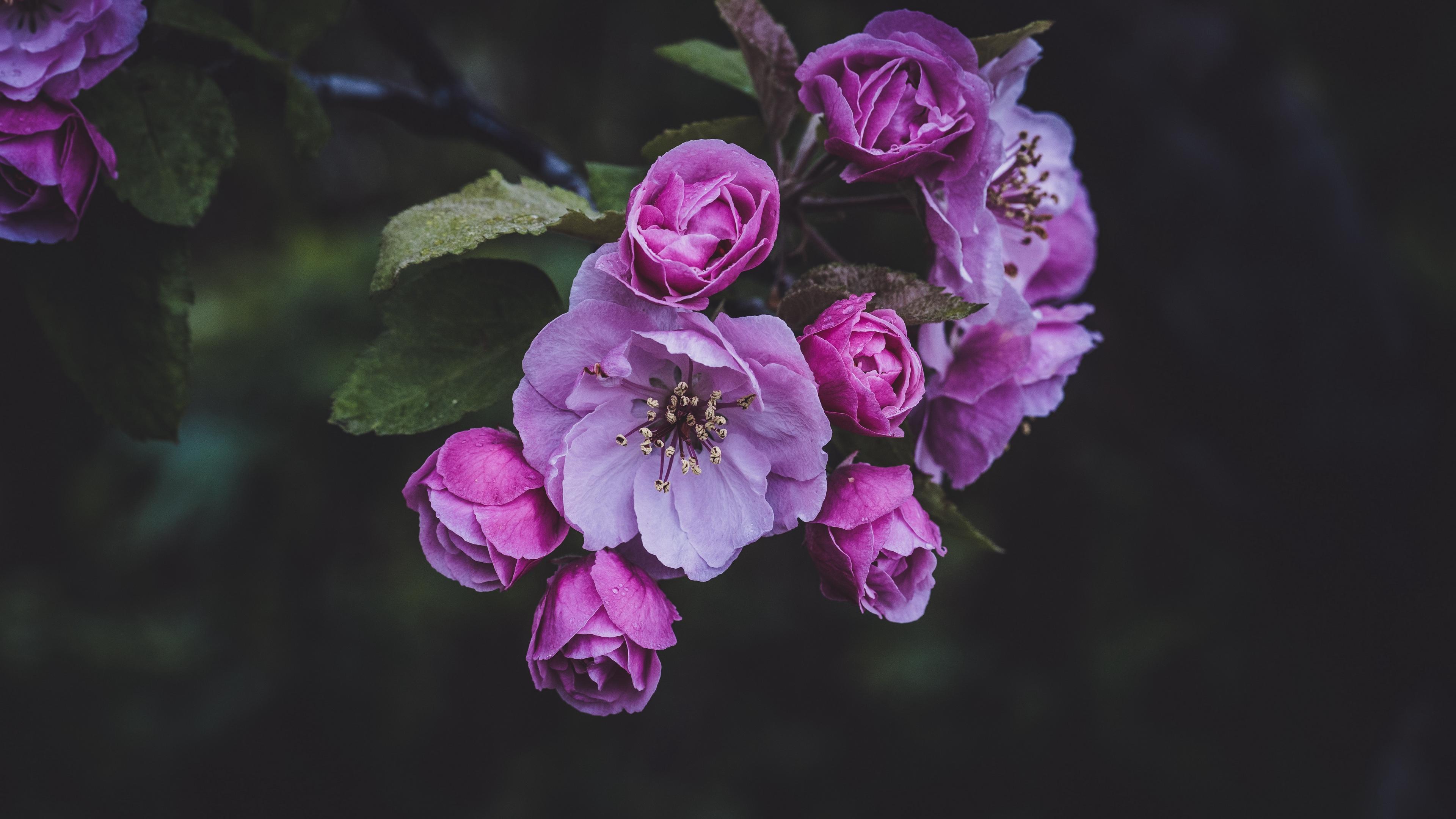 flowers pink spring bloom 4k 1540064946 - flowers, pink, spring, bloom 4k - Spring, Pink, Flowers