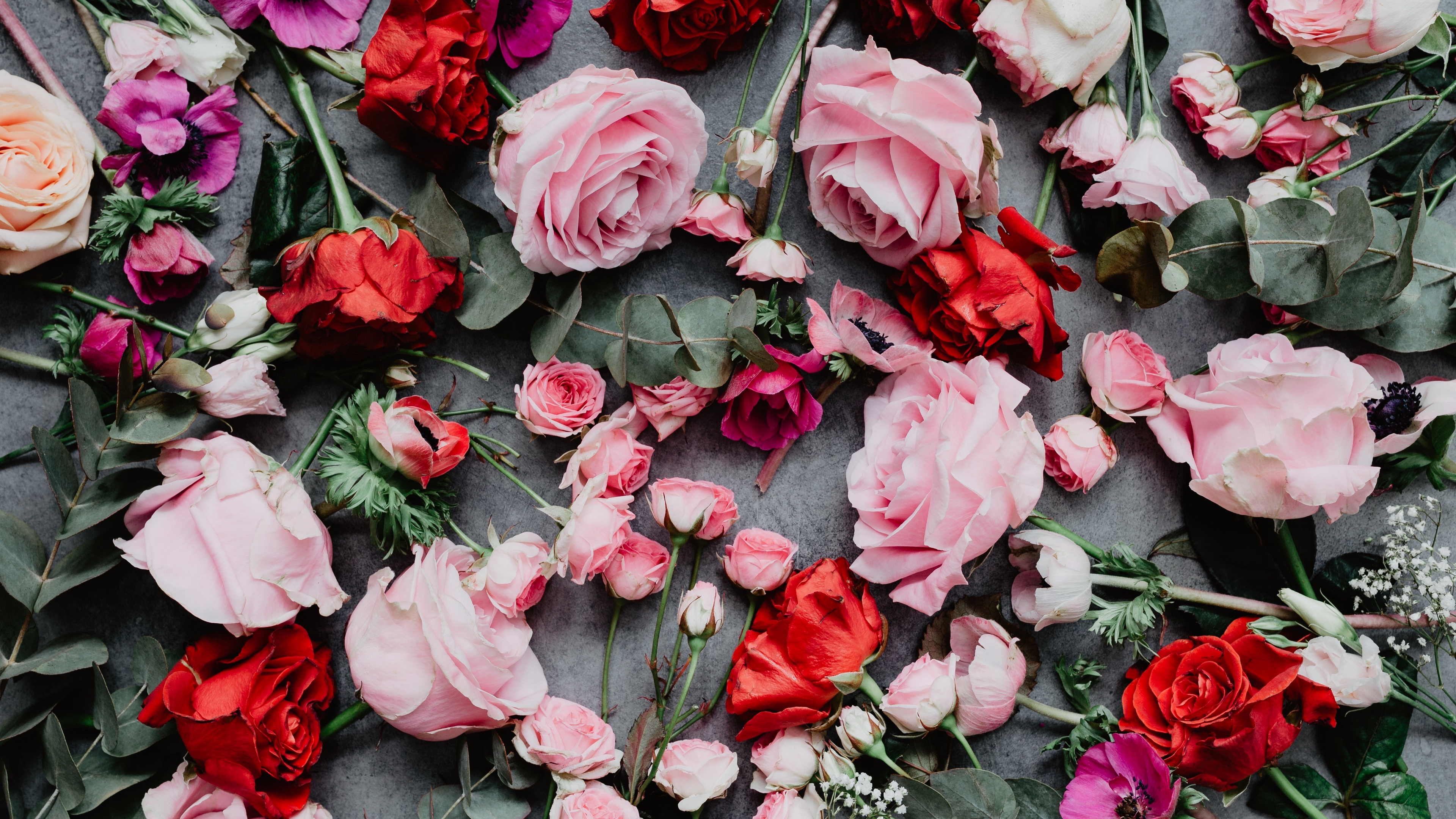 flowers roses composition red pink 4k 1540065025 - flowers, roses, composition, red, pink 4k - Roses, Flowers, composition