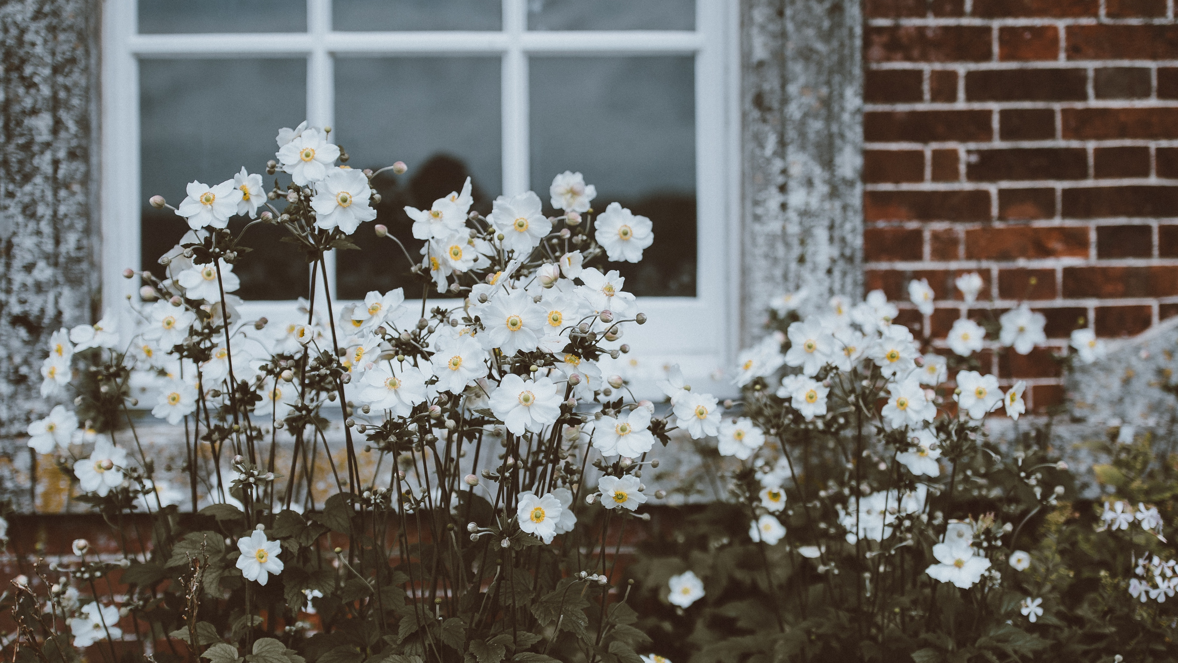 flowers window flower bed 4k 1540064419 - flowers, window, flower bed 4k - Window, Flowers, flower bed
