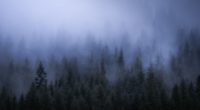 fog dark forest tress landscape 5k 1540143374 200x110 - Fog Dark Forest Tress Landscape 5k - trees wallpapers, nature wallpapers, landscape wallpapers, hd-wallpapers, forest wallpapers, fog wallpapers, 5k wallpapers, 4k-wallpapers