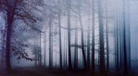 fog forest morning 4k 1540135429 200x110 - Fog Forest Morning 4k - nature wallpapers, morning wallpapers, hd-wallpapers, forest wallpapers, fog wallpapers, 4k-wallpapers