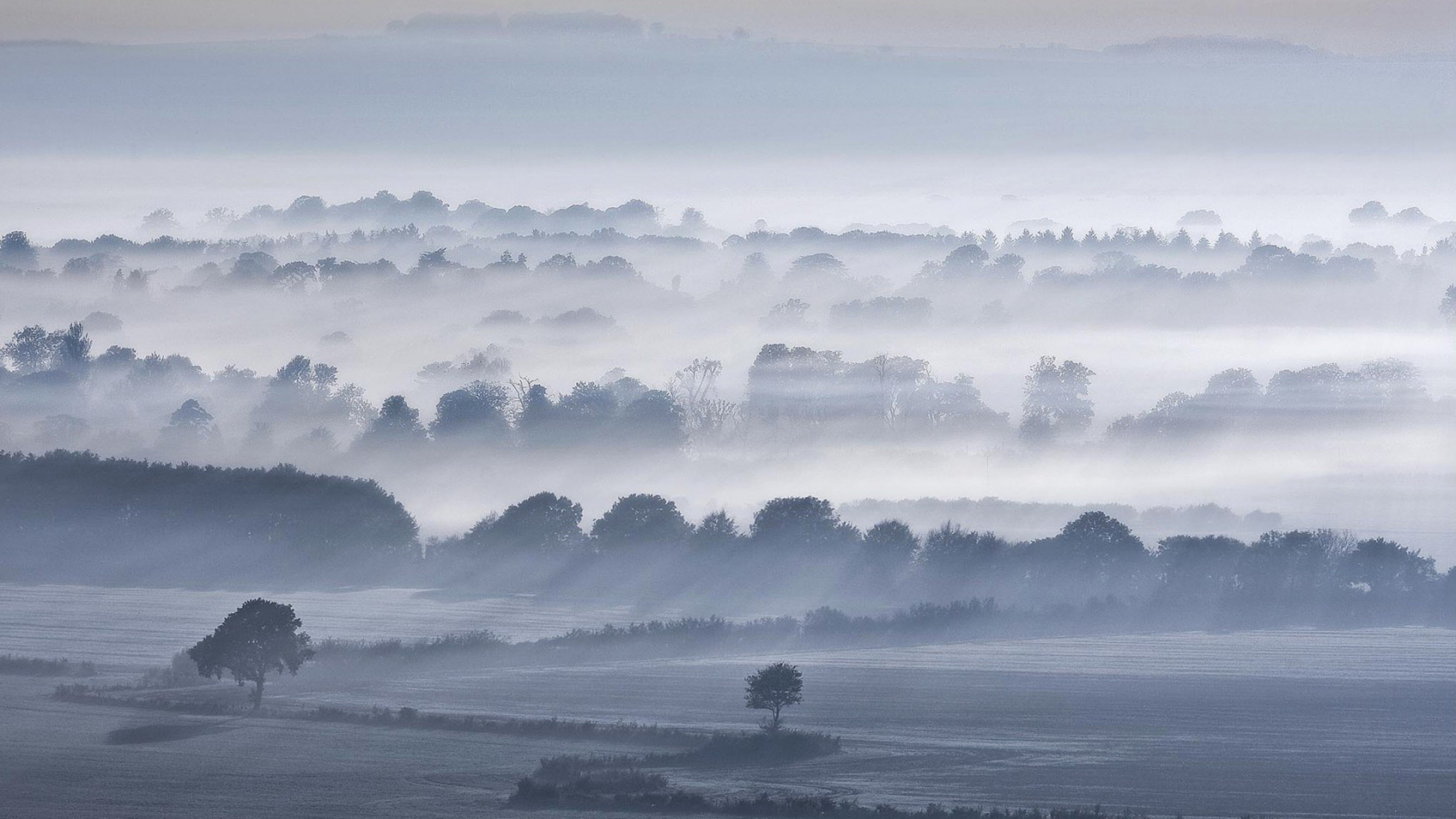 fog trees 4k 1540131540 - Fog Trees 4k - trees wallpapers, sky wallpapers, nature wallpapers, fog wallpapers