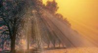 foggy trees winter 1540136553 200x110 - Foggy Trees Winter - winter wallpapers, trees wallpapers, nature wallpapers, hd-wallpapers, fog wallpapers, 4k-wallpapers