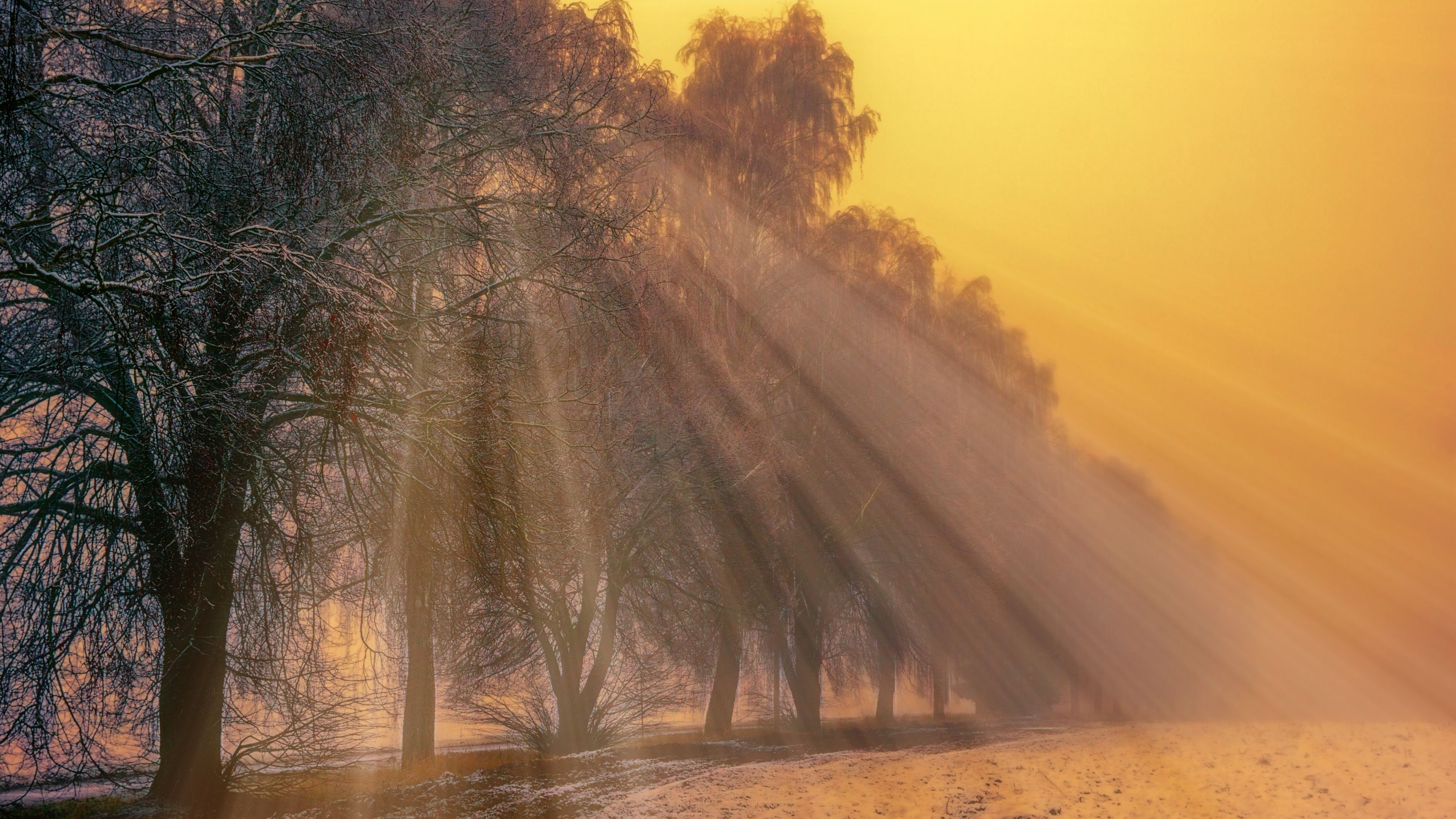 foggy trees winter 1540136553 - Foggy Trees Winter - winter wallpapers, trees wallpapers, nature wallpapers, hd-wallpapers, fog wallpapers, 4k-wallpapers