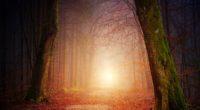 forest beautiful sunbeams 5k 1540136536 200x110 - Forest Beautiful Sunbeams 5k - trees wallpapers, sunbeam wallpapers, nature wallpapers, hd-wallpapers, forest wallpapers, autumn wallpapers, 5k wallpapers, 4k-wallpapers