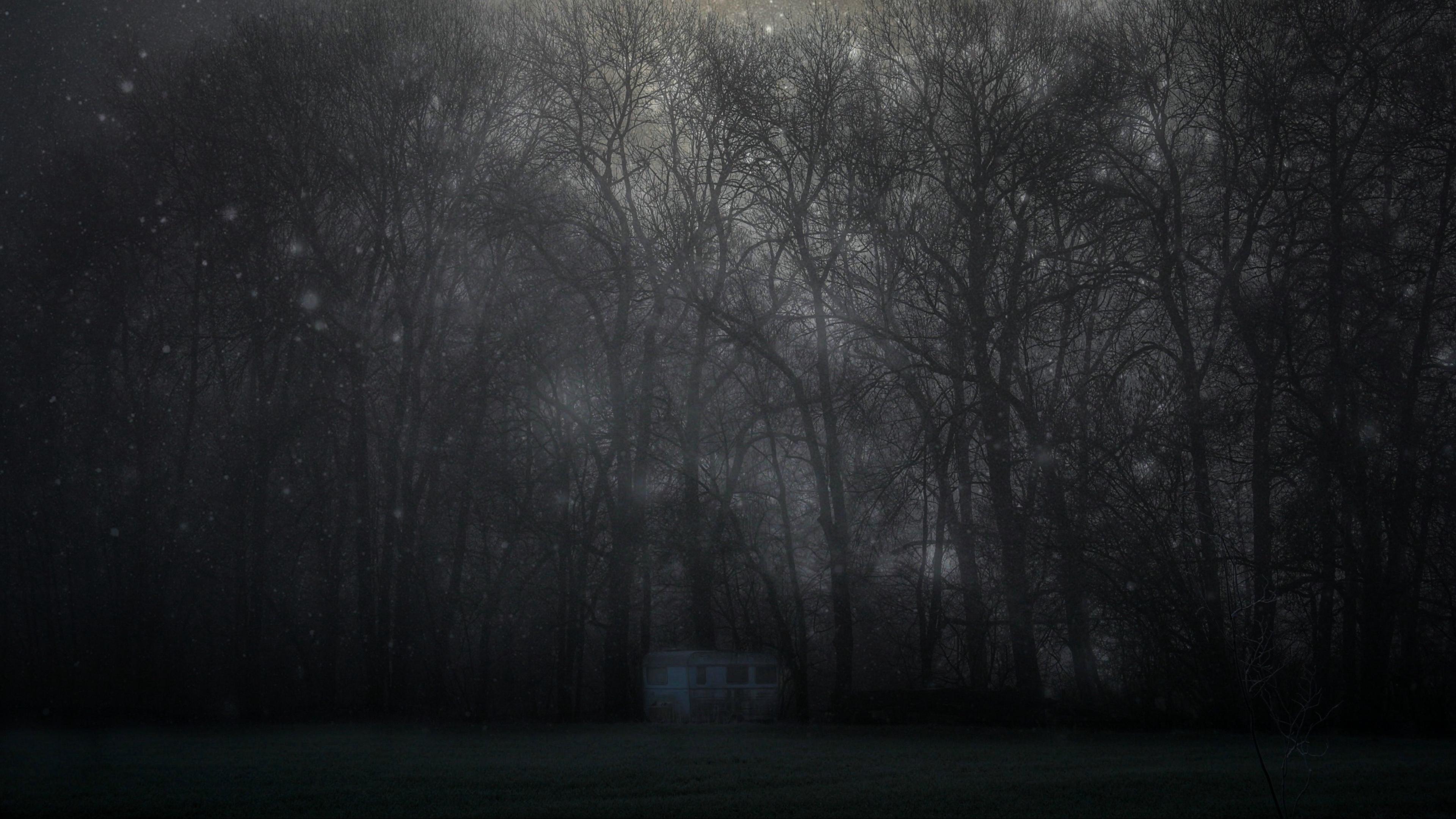 forest mystical fog trees night starry sky 4k 1540575358 - forest, mystical, fog, trees, night, starry sky 4k - Mystical, Forest, fog