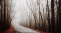 forest road fog autumn turn 4k 1540145432 200x110 - forest, road, fog, autumn, turn 4k - Road, Forest, fog