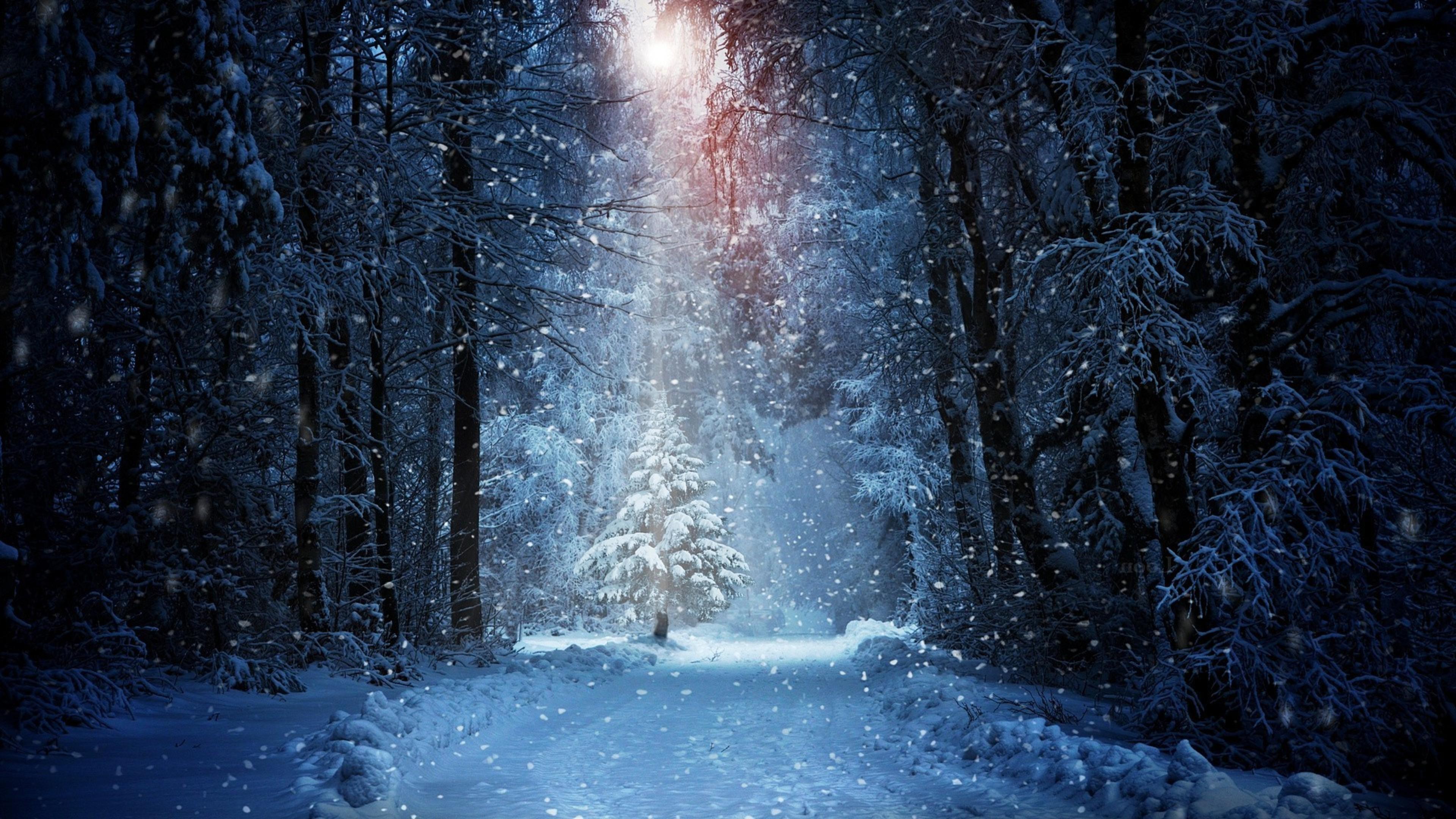 forest winter snow 4k 1540131543 - Forest Winter Snow 4k - winter wallpapers, snow wallpapers, nature wallpapers, forest wallpapers