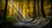 forests roads rays of light 4k 1540133785 200x110 - Forests Roads Rays Of Light 4k - sunbeam wallpapers, road wallpapers, nature wallpapers, light wallpapers, hd-wallpapers, forest wallpapers, 5k wallpapers, 4k-wallpapers