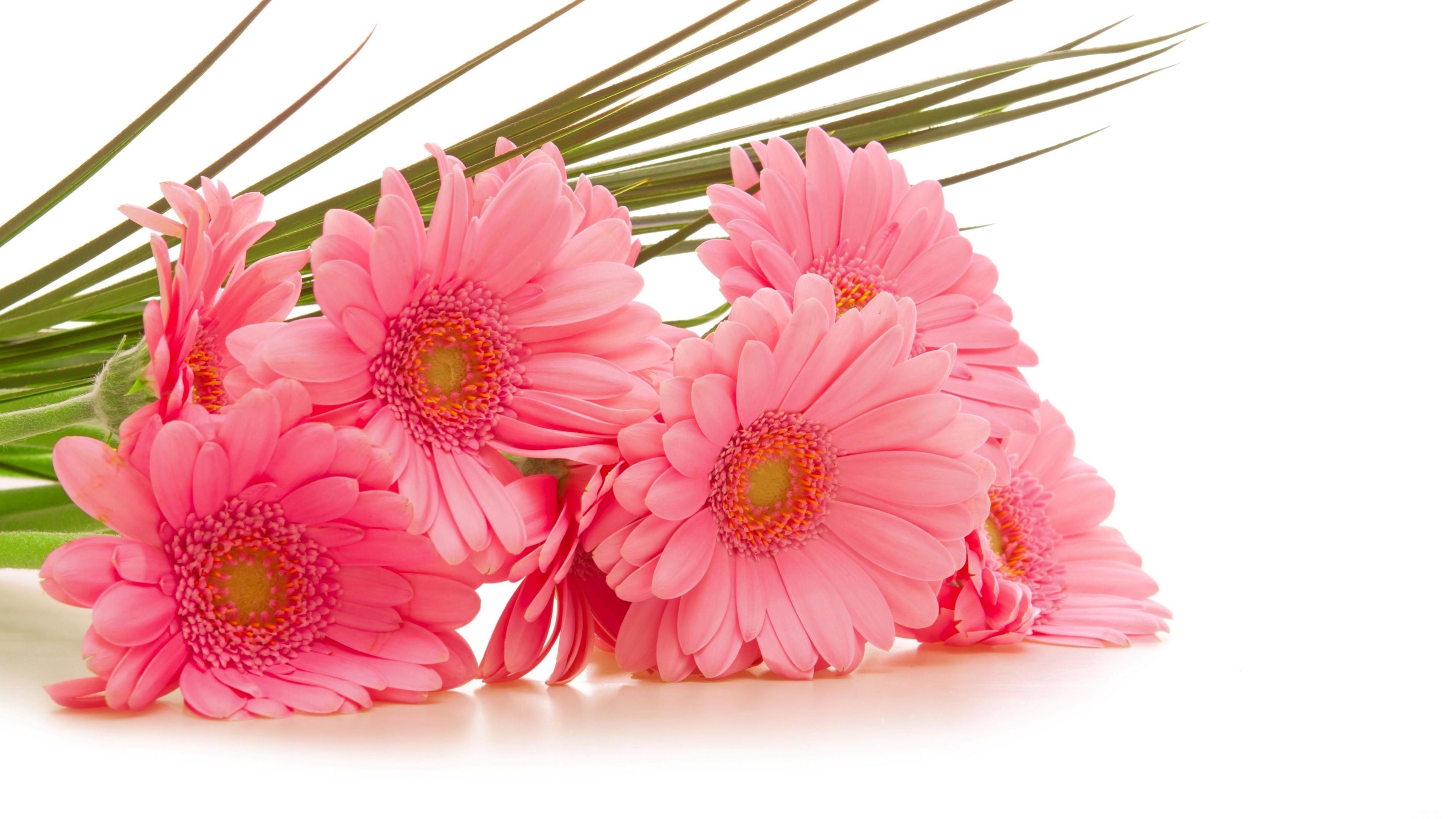 gerbera flowers bouquet pink green 4k 1540064891 - gerbera, flowers, bouquet, pink, green 4k - Gerbera, Flowers, Bouquet