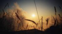 grass silhouette at evening 4k 1540135865 200x110 - Grass Silhouette At Evening 4k - silhouette wallpapers, nature wallpapers, hd-wallpapers, grass wallpapers, evening wallpapers, dusk wallpapers, dawn wallpapers, 5k wallpapers, 4k-wallpapers