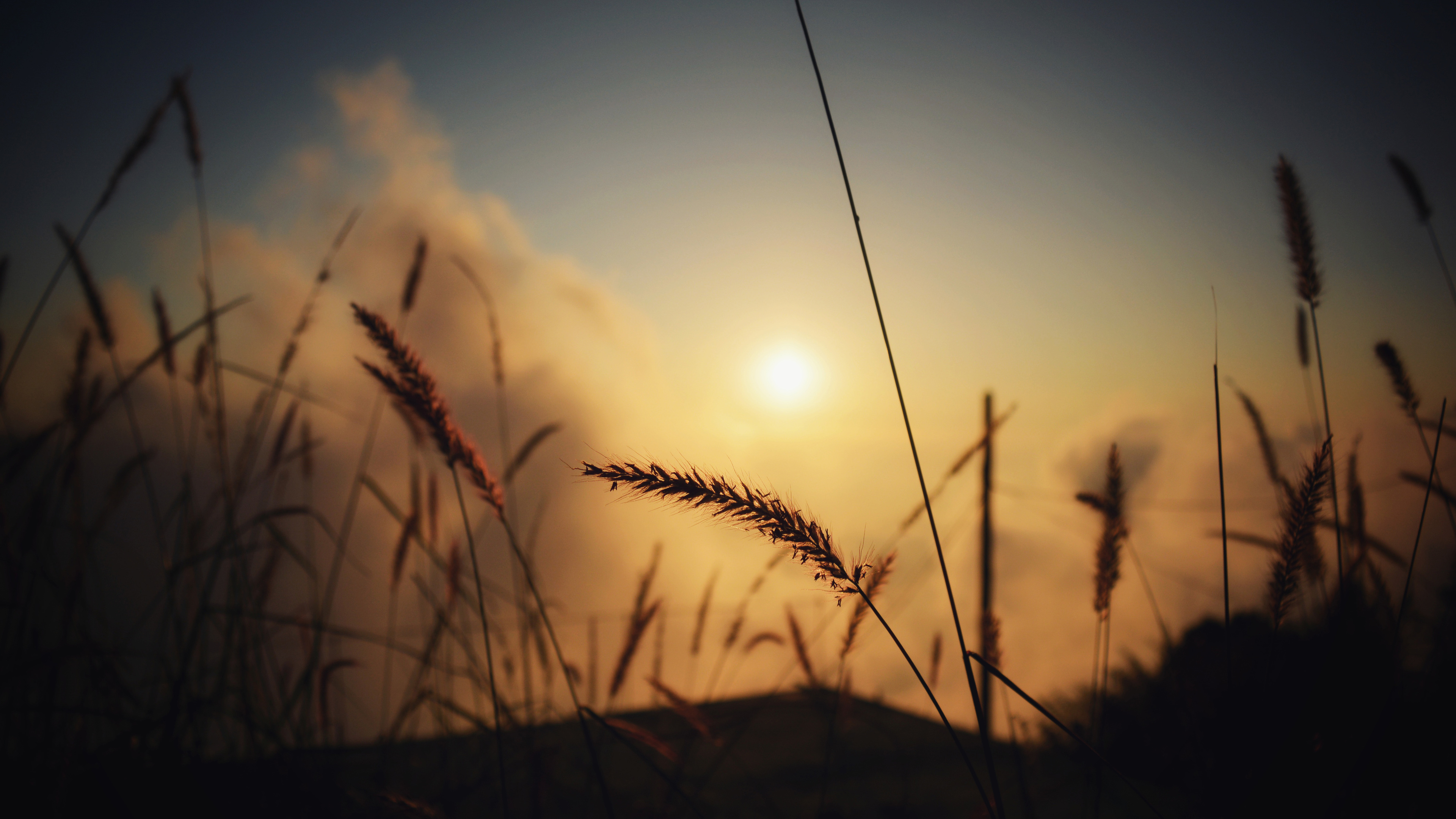 grass silhouette at evening 4k 1540135865 - Grass Silhouette At Evening 4k - silhouette wallpapers, nature wallpapers, hd-wallpapers, grass wallpapers, evening wallpapers, dusk wallpapers, dawn wallpapers, 5k wallpapers, 4k-wallpapers