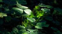 green leaf macro nature grass water drop 4k 1540133813 200x110 - Green Leaf Macro Nature Grass Water Drop 4k - water wallpapers, nature wallpapers, macro wallpapers, hd-wallpapers, grass wallpapers, drop wallpapers, 4k-wallpapers