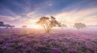 heath in bloom 4k 1540133282 200x110 - Heath In Bloom 4k - trees wallpapers, nature wallpapers, hd-wallpapers, 4k-wallpapers