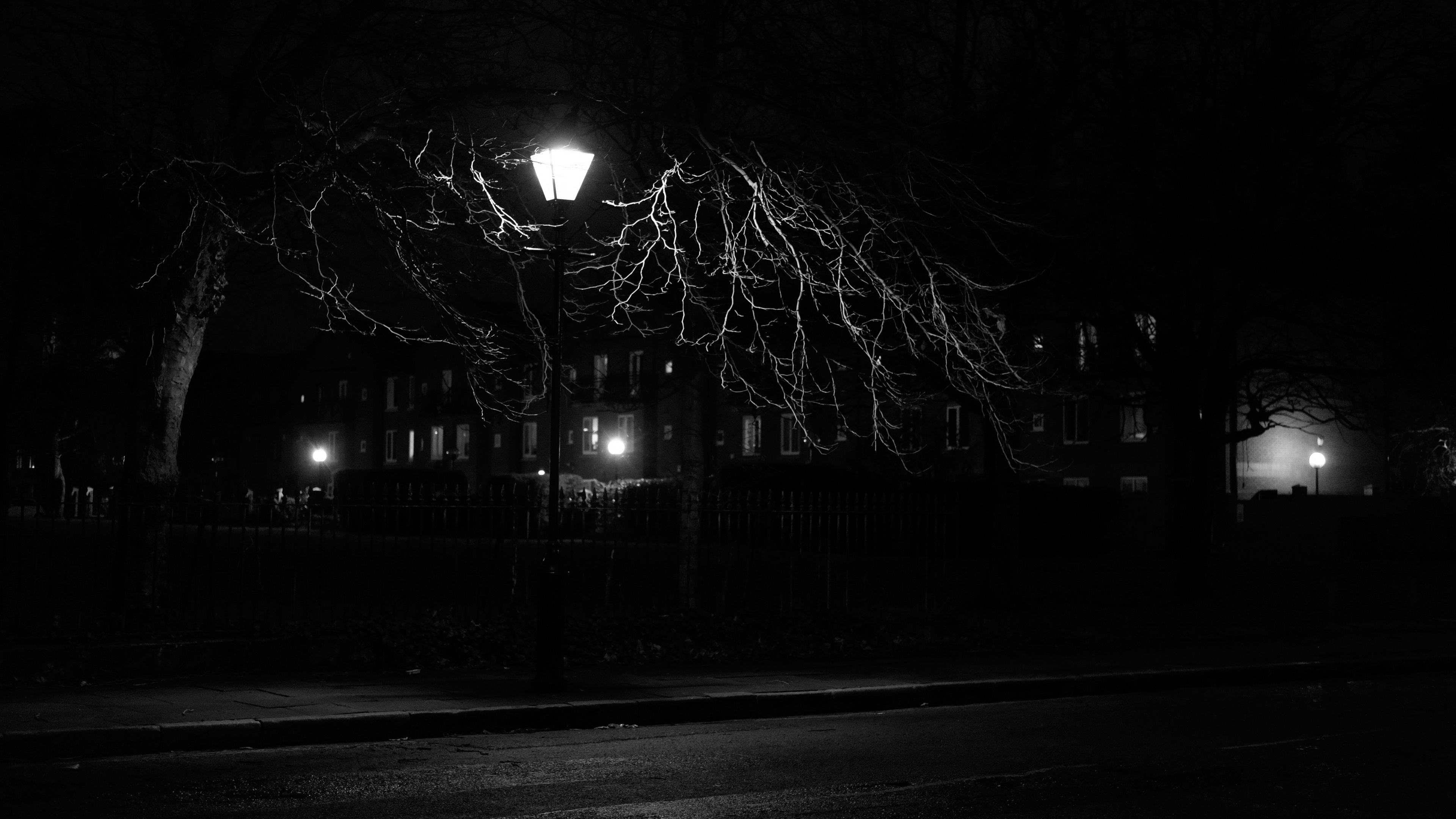 lantern night tree bw 4k 1540576066 - lantern, night, tree, bw 4k - tree, Night, lantern