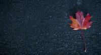 leaf autumn 4k 1540133779 200x110 - Leaf Autumn 4k - nature wallpapers, leaf wallpapers, hd-wallpapers, autumn wallpapers, 5k wallpapers, 4k-wallpapers