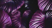 leaves plant violet 4k 1540576263 200x110 - leaves, plant, violet 4k - Violet, Plant, Leaves