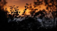 leaves silhouettes outlines sunset plants 4k 1540576328 200x110 - leaves, silhouettes, outlines, sunset, plants 4k - silhouettes, outlines, Leaves