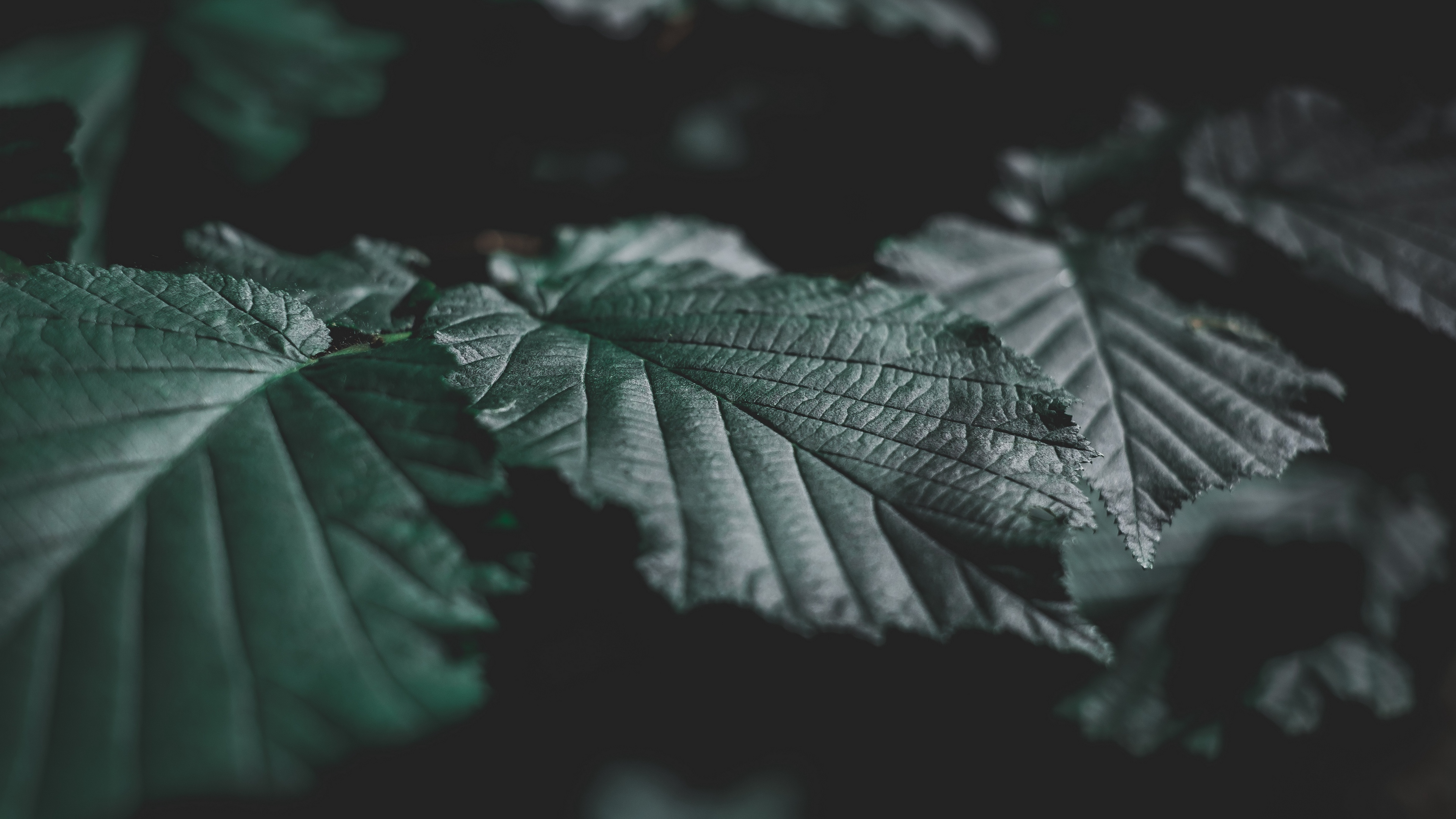 leaves veins close up 4k 1540574480 - leaves, veins, close-up 4k - veins, Leaves, close-up