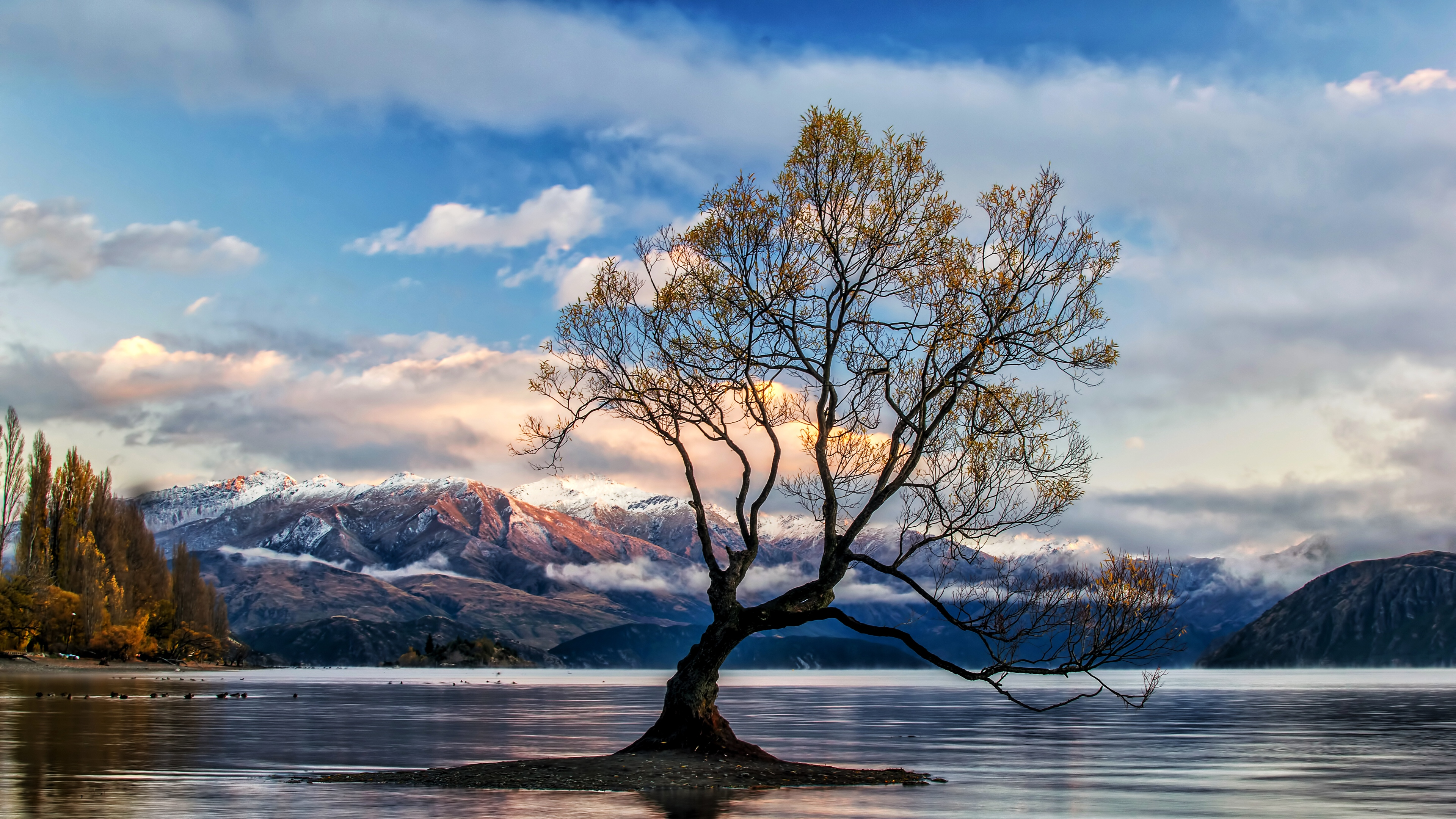 lone tree lake wanaka 4k 1540136229 - Lone Tree Lake Wanaka 4k - tree wallpapers, new zealand wallpapers, nature wallpapers, lake wanaka wallpapers, lake wallpapers, hd-wallpapers, 5k wallpapers, 4k-wallpapers