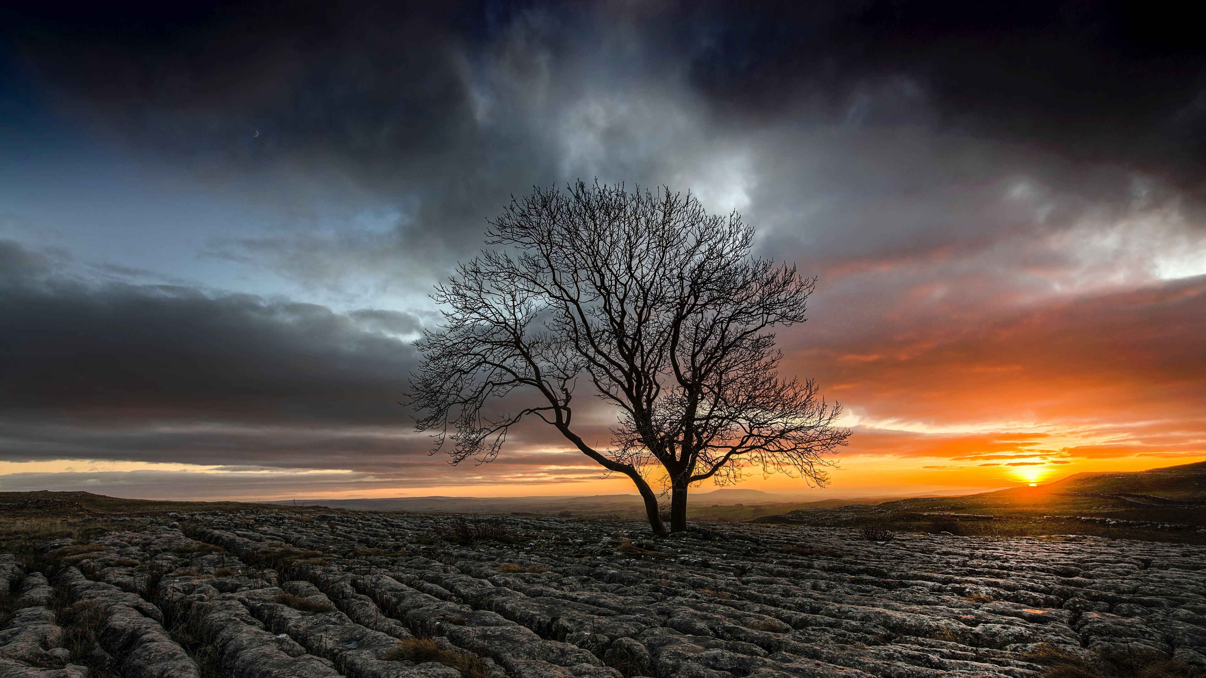 lonely tree in drought field sunset 1540141545 - Lonely Tree In Drought Field Sunset - tree wallpapers, sunset wallpapers, nature wallpapers, hd-wallpapers, field wallpapers, drought wallpapers, 8k wallpapers, 5k wallpapers, 4k-wallpapers